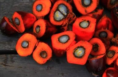El aceite de palma es malo para la salud