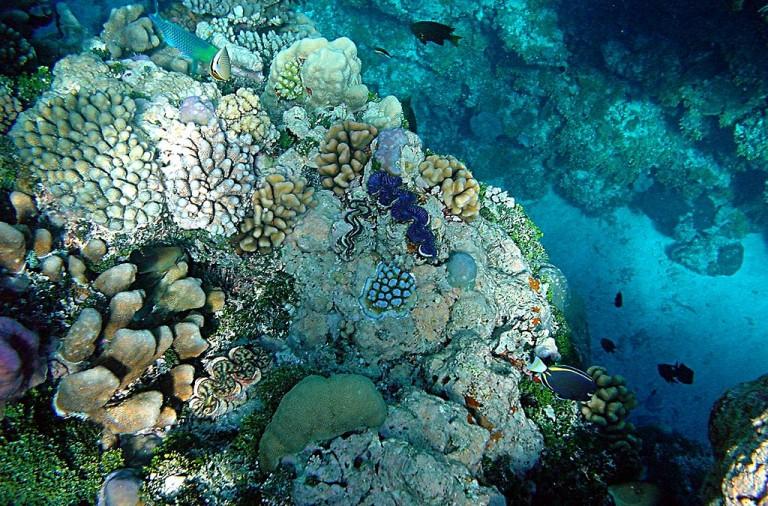 Arrecifes de coral en Papua Nueva Guinea con almejas gigantes,