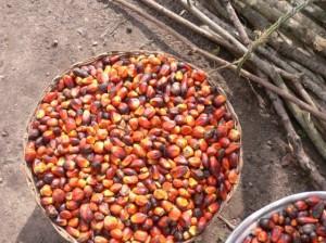 El fruto de la palma. WIKIMEDIA