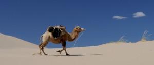¿Cómo son capaces los camellos de encontrar agua en el desierto?