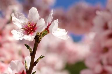 Astenia primaveral qué es