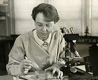 Barbara McClintock en 1947, trabajando en su laboratorio de Cold Spring Harbor