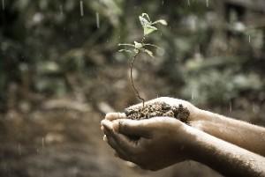 ¿Qué produce el olor a lluvia?